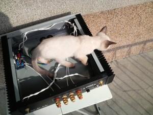 おまけ、LM3886自作アンプと子猫